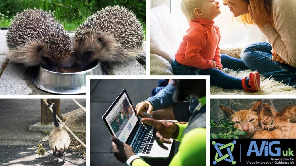 collage: parenting, viewing recordings on a laptop and Association of Video Interaction Guidance accreditation.